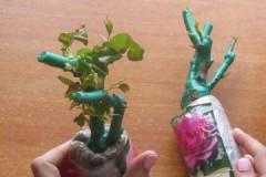 Советы опытных цветоводов, как убрать воск с саженцев розы
