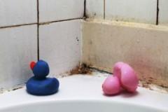 Как быстро и эффективно убрать плесень в ванной?