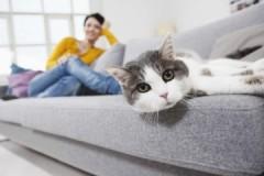 Как и чем быстро, просто и недорого убрать запах кошачьей мочи с дивана?