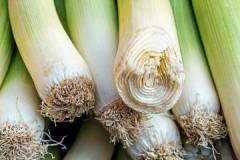 Запасливым хозяйкам на заметку: как хранить лук-порей дома?