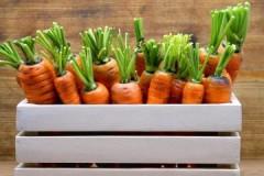 Пошаговая инструкция и полезные советы, как хранить морковь в домашних условиях