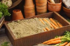 Все самое важное о хранении моркови на зиму в опилках