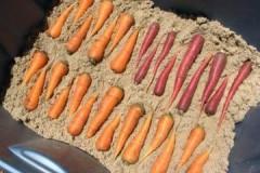 Плюсы, минусы и условия зимнего хранения моркови в песке