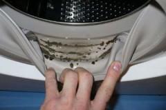 Как просто и недорого убрать плесень в стиральной машине на резине/резинке?