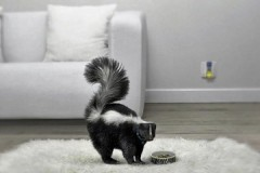 Эффективные методы и полезные советы о том, как убрать различные запахи с дивана