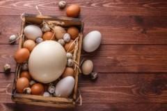 Каковы сроки хранения куриных, гусиных, утиных, перепелиных и страусиных яиц при комнатной температуре?
